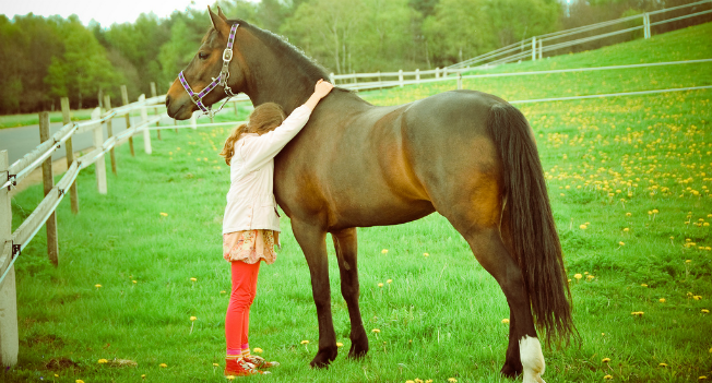 horses-are-good-for-your-health